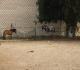 חווה מסביב לחדרים קרית ביאליק | חדרים בחיפה והסביבה